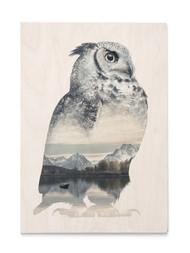 Print on plywood Faunascapes - Owl