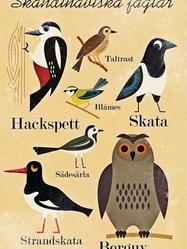 "Affisch Ingela Arrhenius ""Skandinaviska fåglar"" 50x70 cm"