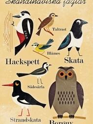 "Poster Ingela P Arrhenius ""Skandinaviska fåglar"" 50x70 cm"