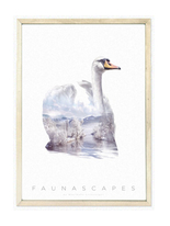 Affisch A3 Faunascapes - Swan