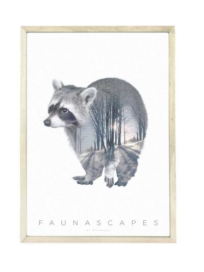 Affisch A3 Faunascapes - Raccoon