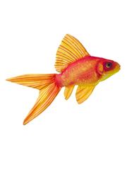 Fisk-kudde Guldfisk 50 cm